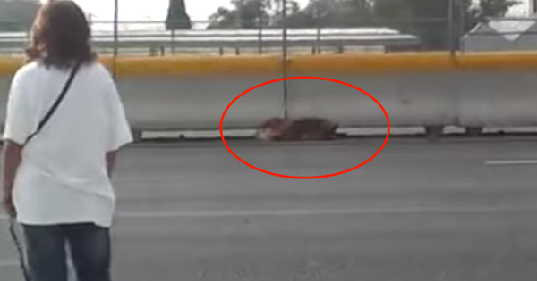 Brave Woman Ventures Over A Busy Mexican Highway To Rescue An Injured Dog.