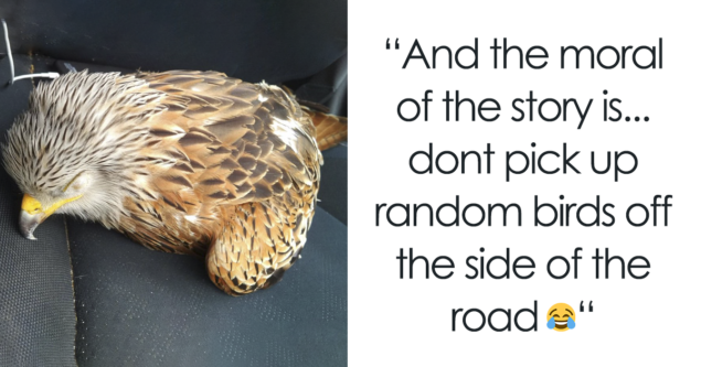 Man Rescued Injured Bird, And Now He Probably Wishes He Hadnt