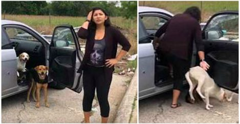 Footage Shows Woman Abandoning Four Dogs In Parking Lot, Until She Is Confronted